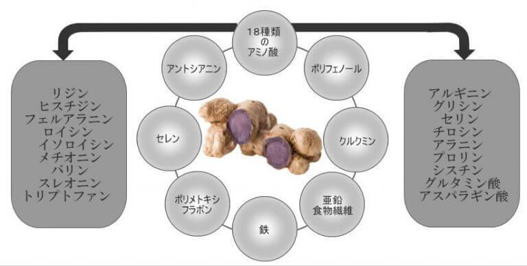 黒ガリンガルの含有物説明図